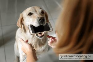 Sie bringen das Telefon